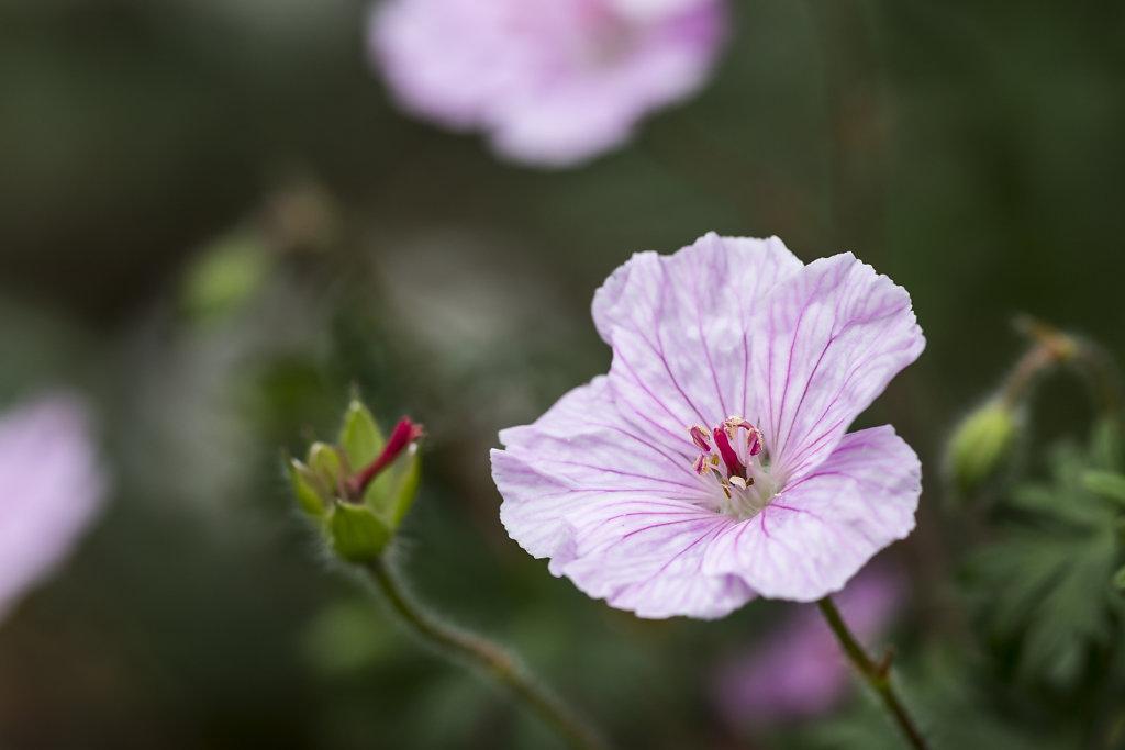 Fleur de sous-bois