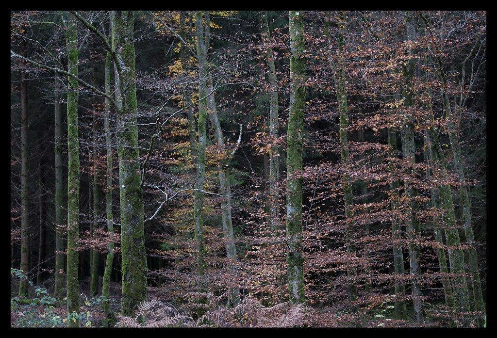 Dibond-3-Ardennes-Fond-noir-de-sapin.jpg